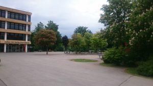 Wohin das Auge reicht - blühende Kastanienbäume.